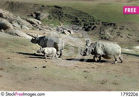 Free Rhino Family Royalty Free Stock Image - 1792206