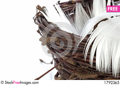 Free Nest With Feathers Royalty Free Stock Photo - 1792365