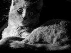 Free Cat Stock Image - 1790001