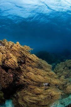 Free Soft Corals Philippines Stock Photo - 1790180