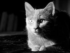 Free Cat Royalty Free Stock Photos - 1790248