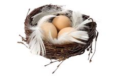 Free Nest With Eggs And Feathers Stock Photo - 1792370