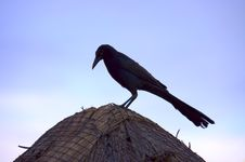 Free Tropical Bird Royalty Free Stock Image - 1793446