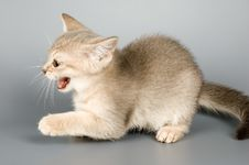 Free Kitten Whom The First Time Poses Stock Image - 1793791