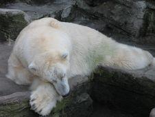 Free Bear Royalty Free Stock Photos - 1793998