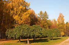 Free Autumn Park Royalty Free Stock Photo - 1797375