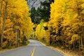 Free Autumn Foliage Stock Photo - 17902420
