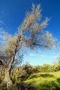 Free Tree Stock Photos - 17903113