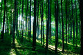 Free Green Forest Royalty Free Stock Photo - 17904065