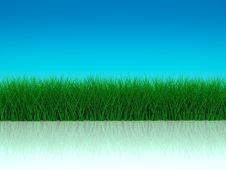 Free Grass With Realistic Reflections Stock Image - 17900971