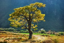 Free Golden Tree Stock Photos - 17901483