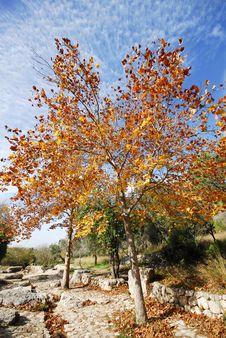 Free Autumn Tree Stock Photo - 17902260