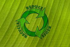 Free Banana Leaf Stock Photography - 17902392