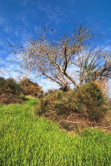 Free Tree Royalty Free Stock Photography - 17903027