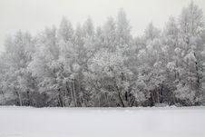 Winter Wood Royalty Free Stock Images