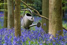 Free Watering Can Between Flowers Stock Photography - 17904552
