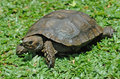 Free Emys Turtle Stock Photo - 17919790