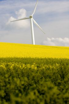 Free Windmill And Rape Field Royalty Free Stock Photography - 17911627