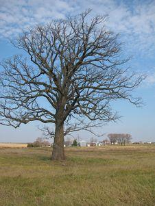 Free Tree In Field Royalty Free Stock Photos - 17912168