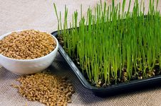 Free Homegrown Wheat Royalty Free Stock Photography - 17912617