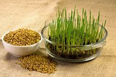 Free Homegrown Wheat Stock Images - 17912634