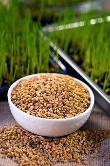 Free Homegrown Wheat Stock Photos - 17912643