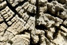 Wood Texture 1. Stock Photography