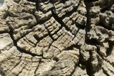 Wood Texture 3. Stock Photo