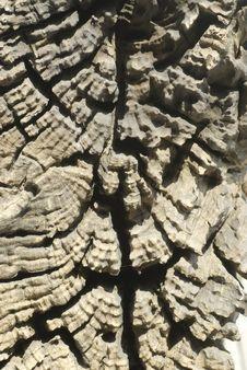 Free Wood Texture 5. Stock Photo - 17913920