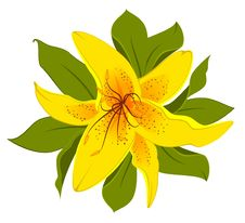 Beautiful Lily Design Element Stock Photography