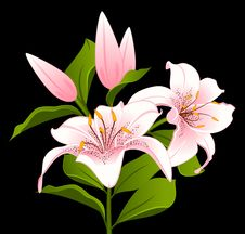 Free Beautiful Lily Bouquet Royalty Free Stock Image - 17914496