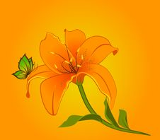 Beautiful Lily Design Element Stock Images