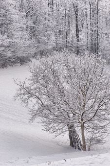 Free Winter Landscape Royalty Free Stock Photography - 17915597