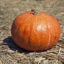 Free The Orange Pumpkin Stock Photo - 17916880