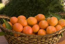 Free Tangerines Stock Image - 17917481