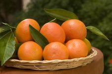 Free Tangerines Stock Photography - 17917572