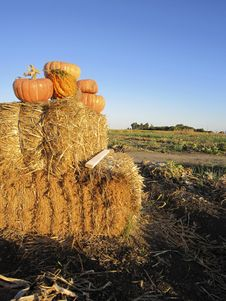 Free Pumpkins On A Bale Of Hay Royalty Free Stock Image - 17918166