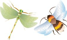 Free Dragonfly And Bumblebee. Royalty Free Stock Photography - 17918297