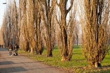 Free Winter Green Park With Trees, Dry Leaves Stock Images - 17918754