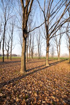 Free Winter Green Park With Trees, Dry Leaves Stock Image - 17918791