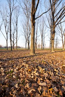 Free Winter Green Park With Trees, Dry Leaves Royalty Free Stock Photos - 17918808