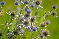 Free Wildflowers Stock Image - 17919551