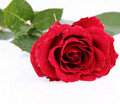 Free Red Rose Covered With Drops Royalty Free Stock Photography - 17928077
