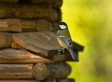 Titmouse On A Wooden Small House Stock Photography