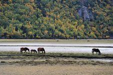 Free Horses Browsing Near  Mountain Lake Stock Photo - 17920990