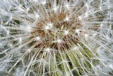 Free Dandelion Closeup Stock Images - 17921724