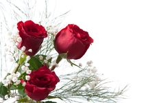 Free Red Roses Stock Photos - 17921973