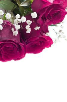Free Pink Roses W Royalty Free Stock Image - 17921976