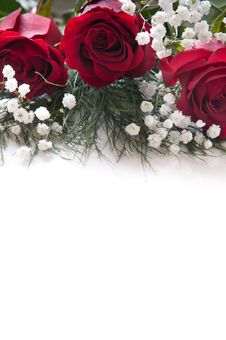 Free Red Roses Stock Photo - 17921980