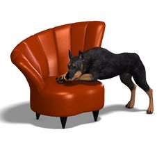Free Black Doberman Dog Stock Image - 17922091